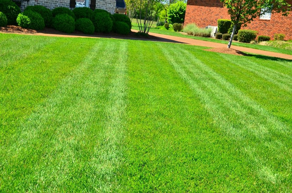 Lawn Care (19).jpg