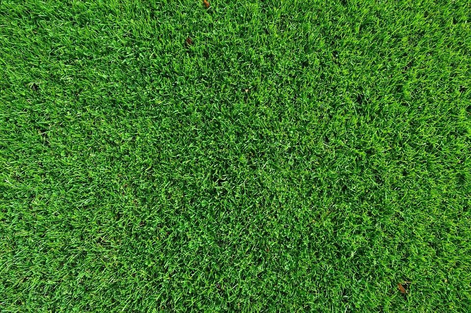 Lawn Care (22).jpg