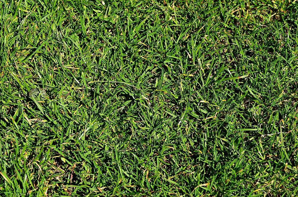 Lawn Care (63).jpg