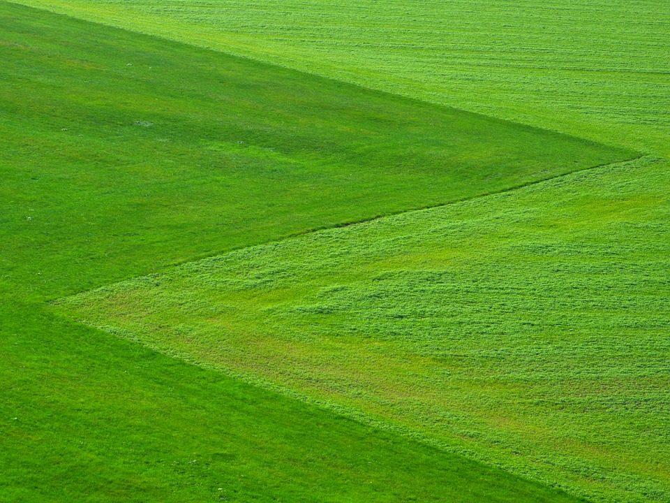 Lawn Care (15).jpg