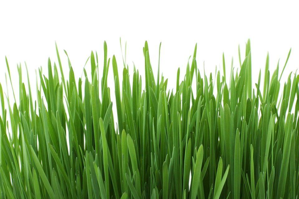 Lawn Care (36).jpg