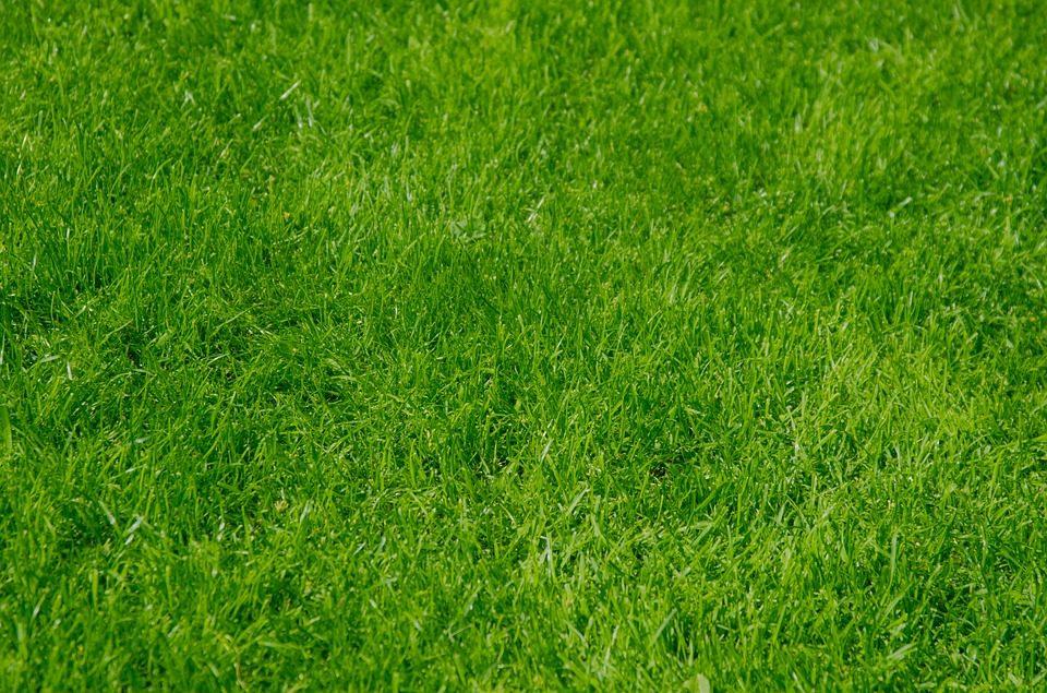 Lawn Care (7).jpg