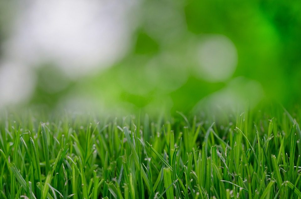 Lawn Care (58).jpg