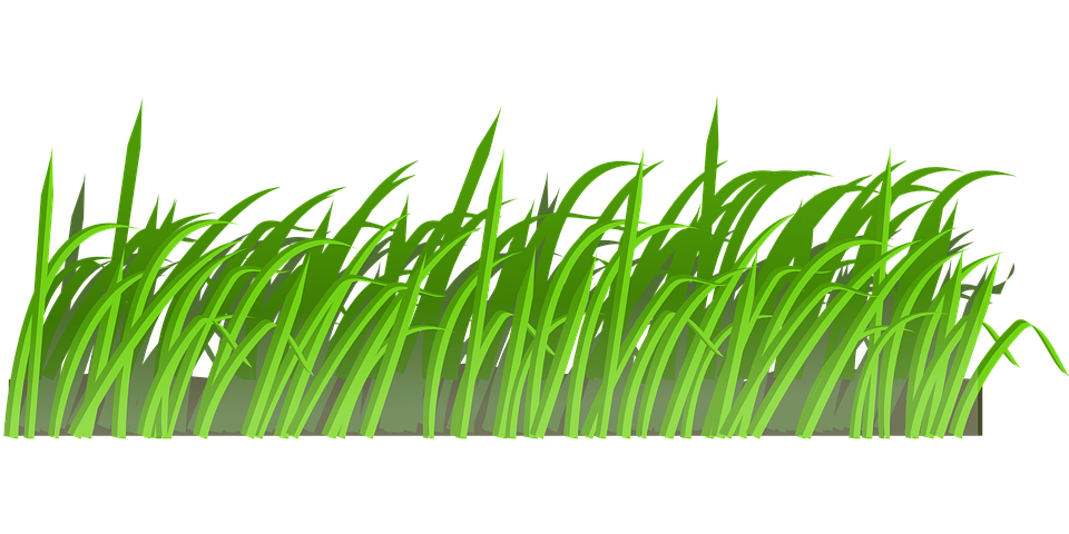 Lawn Care (1).png