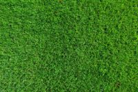 Lawn Care (57).jpg