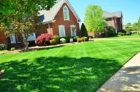 Lawn Care (54).jpg