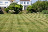 Lawn Care (60).jpg