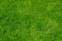 Lawn Care (51).jpg