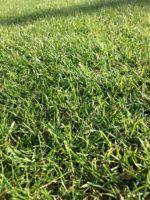Lawn Care (59).jpg