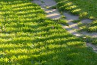 Lawn Care (62).jpg