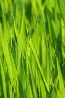 Lawn Care (34).jpg