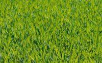 Lawn Care (39).jpg
