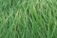Lawn Care (66).jpg