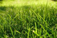 Lawn Care (42).jpg