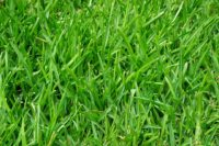 Lawn Care (45).jpg