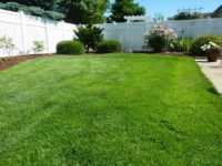 Lawn Care (21).jpg