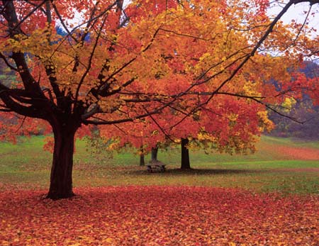 Get Your Landscape Ready With Fall Leaf Removal Duvall