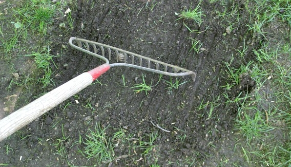 Landscape Rake For Seeding : Lawn duvall care