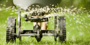 Overseeding after aerating your lawn